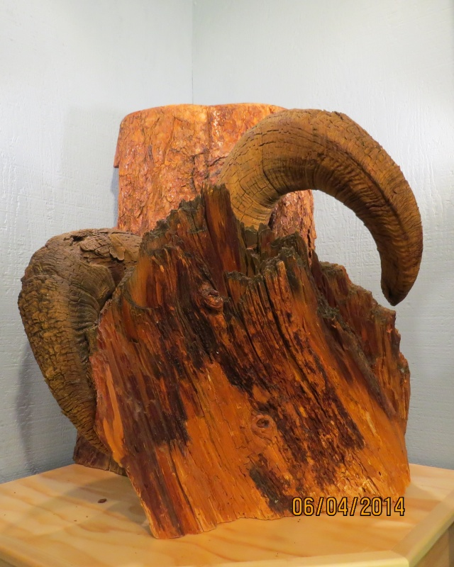 The embedded bighorn sheep horns. Photo provided.