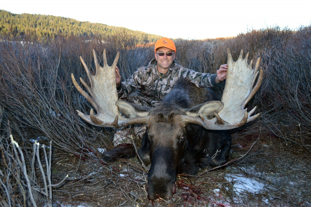 Wyoming Moose Harvest