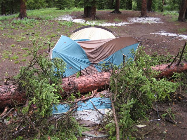A dying tree that fell and crushed a camper's tent. Shoshone National Forest photo.