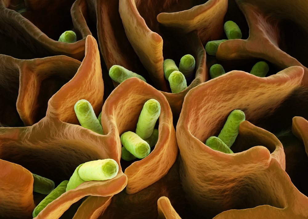 E. coli bacterial colony. 3D rendering by martynowi.cz/Shutterstock.
