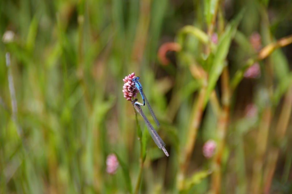 A Dragon Fly shedding its exoskeleton on a sunny day in Riverton. (Photo by Ed Fowler)