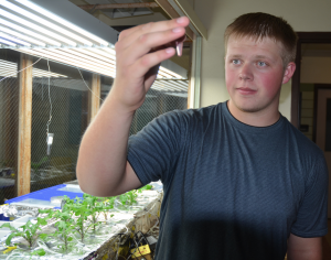 Virgil Morrison from Riverton looks at a test sample in the University of Wyoming Department of Botany's Aven Nelson Building. He is taking part in the six-week Summer Research Apprentice Program that helps promote interest in science careers. (UW Photo)