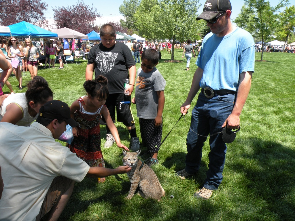 Crowds gathered around a bobcat that one attendee brought with him.