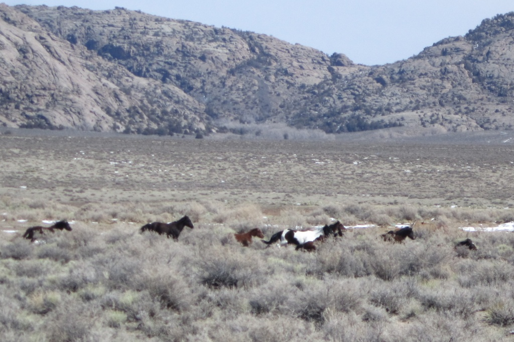 Wild Horses on the run near Split Rock. (Ernie Over photo)