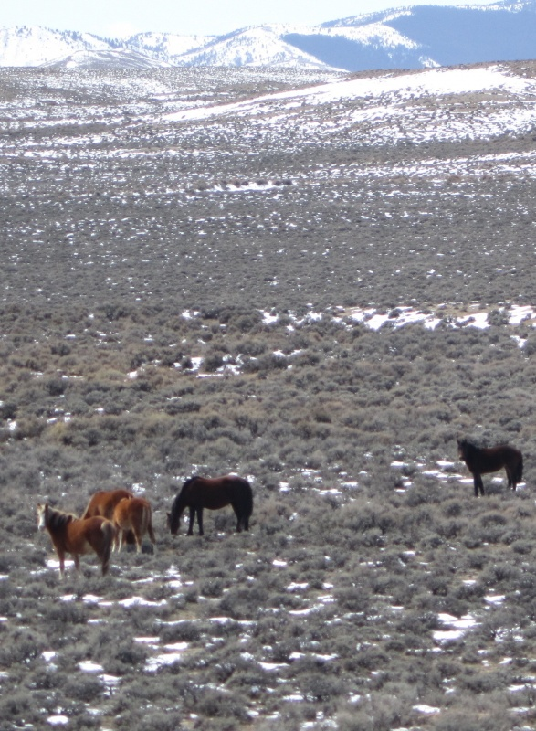 A group of wild horses was photographed in Southeast Fremont County.
