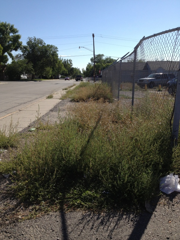 Growth of weeds along East Park Avenue. (Ernie Over photo)