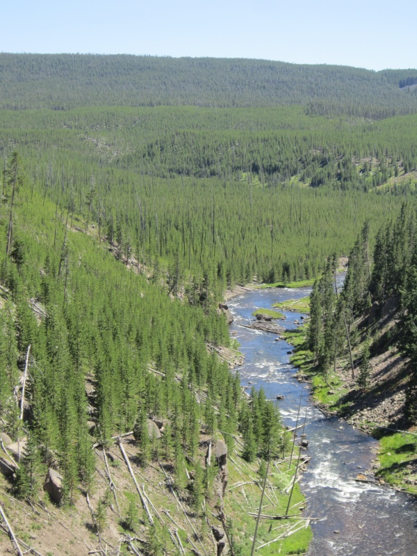Yellowstone - Gibbon River - eo