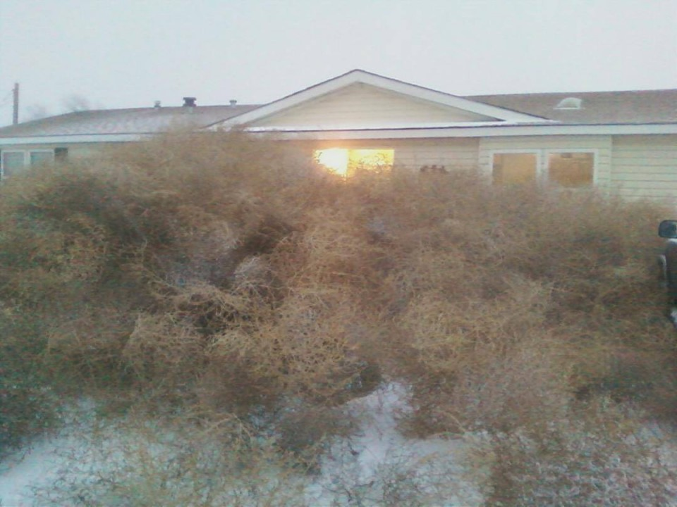The home of Tim and Karen James was taken over by tumbleweeds earlier this week. (Nicole Kelley photo)