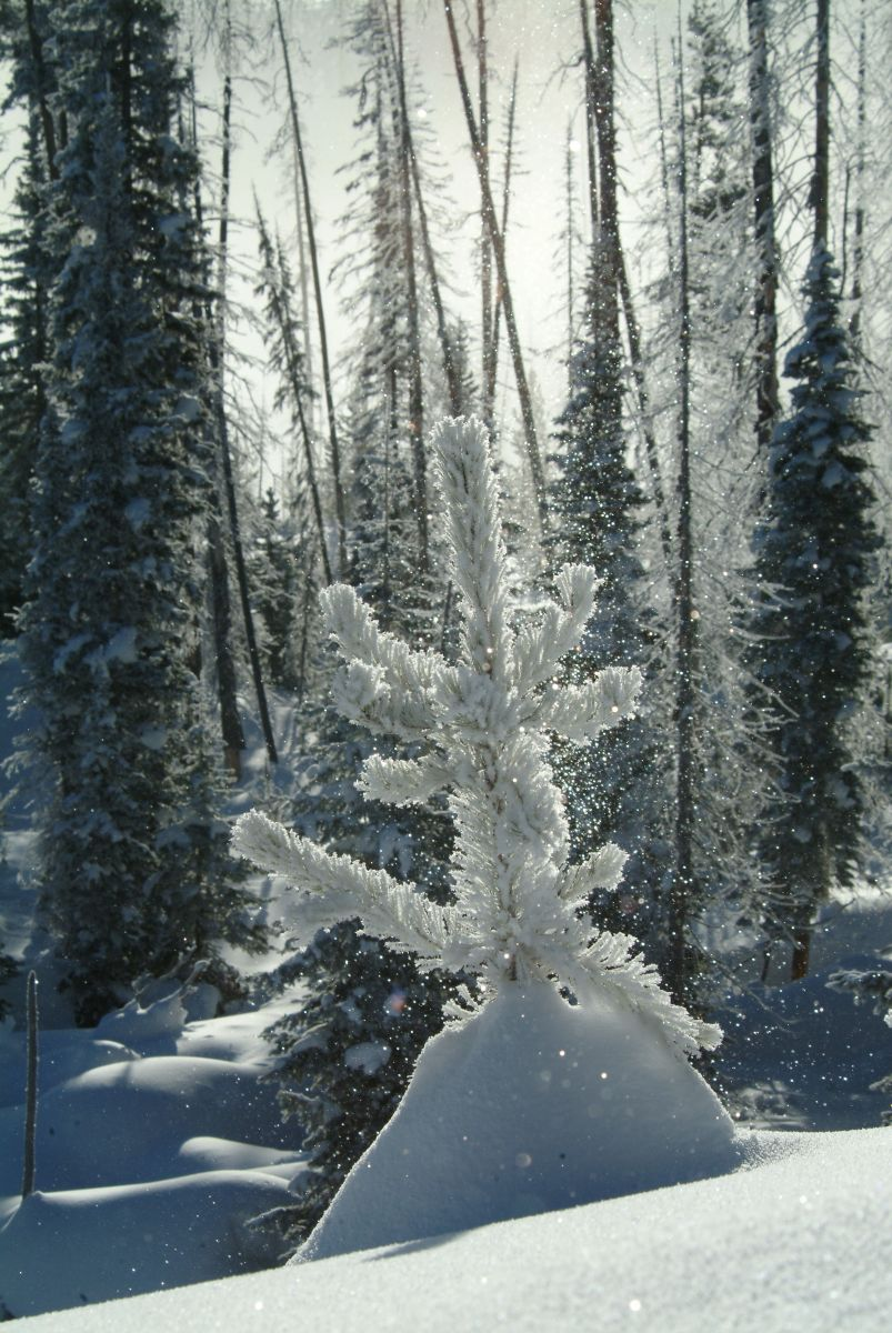 Winter scenic from West Thumb Geyser Basin area. (Wyoming Division of Tourism)