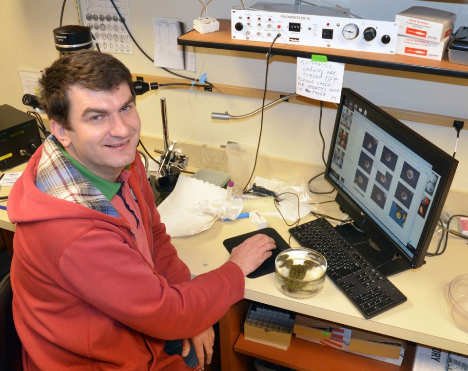 Predrag Jevtic, a UW doctoral student in the Molecular and Cellular Life Sciences program, is lead writer of a paper that appears in Current Biology today. (UW Photo)